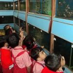 A visit to the Aquarium